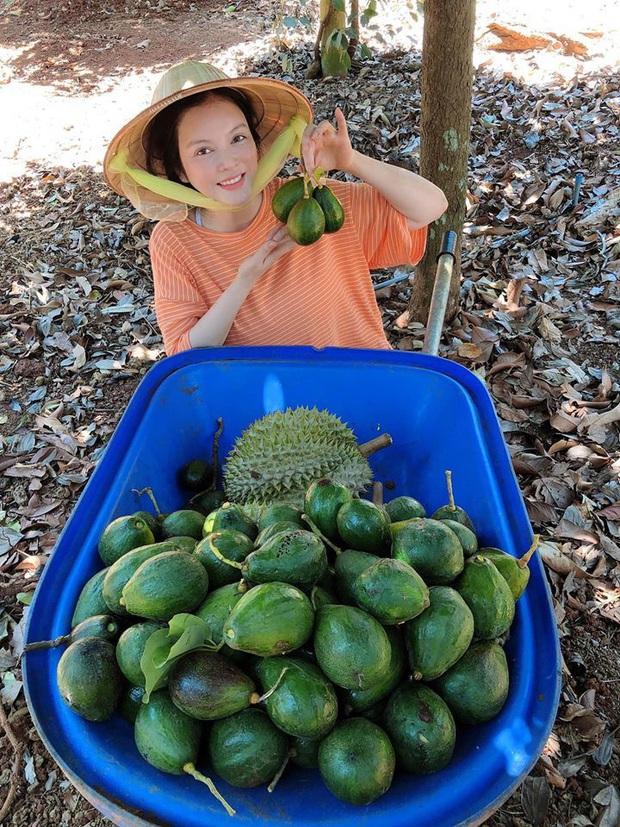 Lý Nhã Kỳ ở nhà làm nông mùa dịch: Giản dị đội nón lá, diện đồ ngủ đi hái trái cây trên nông trại 50 hecta ở Đà Lạt - Ảnh 2.