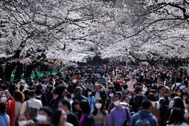 Covid-19 tại Nhật Bản: Tin xấu ngày một dồn dập, Tokyo có nguy cơ trở thành New York thứ 2? - Ảnh 5.