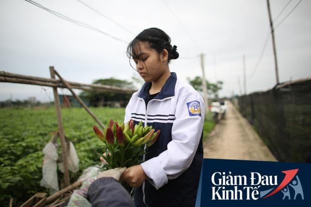 """""""Thủ phủ"""" hoa tại Hà Nội nở rộ giữa dịch COVID-19: Tưởng thắng vụ mà thành bại, hoa cười nhưng người khóc - Ảnh 12."""