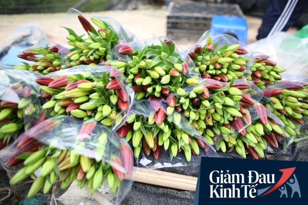 """""""Thủ phủ"""" hoa tại Hà Nội nở rộ giữa dịch COVID-19: Tưởng thắng vụ mà thành bại, hoa cười nhưng người khóc - Ảnh 14."""