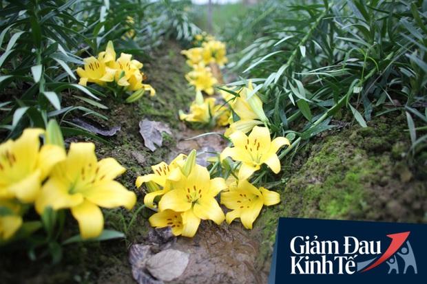 """""""Thủ phủ"""" hoa tại Hà Nội nở rộ giữa dịch COVID-19: Tưởng thắng vụ mà thành bại, hoa cười nhưng người khóc - Ảnh 18."""