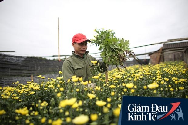 """""""Thủ phủ"""" hoa tại Hà Nội nở rộ giữa dịch COVID-19: Tưởng thắng vụ mà thành bại, hoa cười nhưng người khóc - Ảnh 4."""