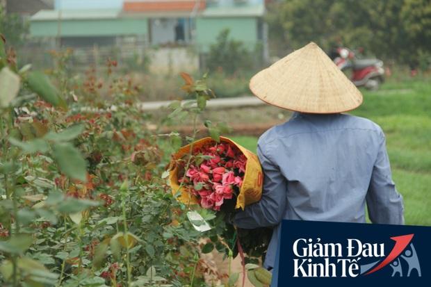 """""""Thủ phủ"""" hoa tại Hà Nội nở rộ giữa dịch COVID-19: Tưởng thắng vụ mà thành bại, hoa cười nhưng người khóc - Ảnh 9."""