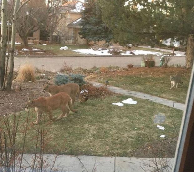 Tranh thủ lúc loài người đang ở nhà cách ly xã hội, hàng loạt loài động vật đều đổ bộ xâm chiếm đường phố - Ảnh 1.