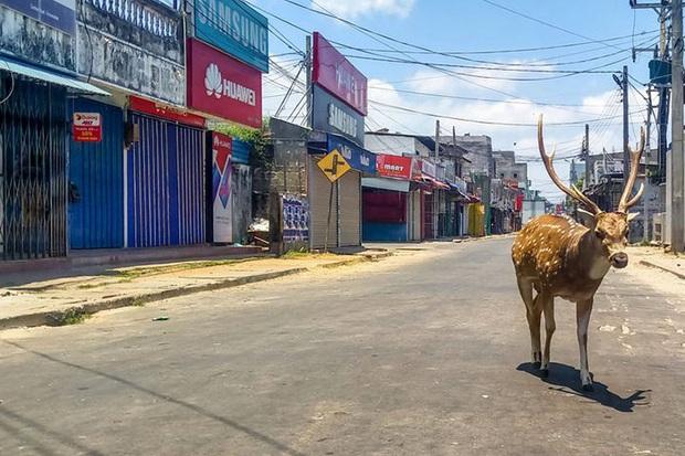 Tranh thủ lúc loài người đang ở nhà cách ly xã hội, hàng loạt loài động vật đều đổ bộ xâm chiếm đường phố - Ảnh 11.