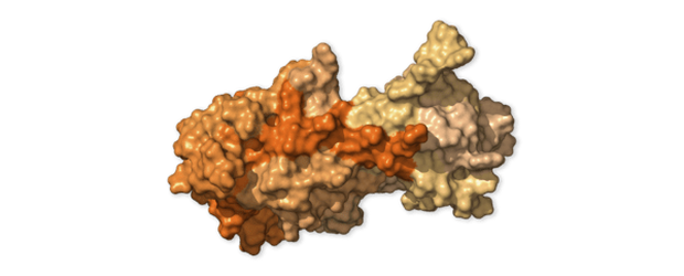 Chi tiết bộ gen SARS-CoV-2: Những tên khủng bố chiếm dụng tế bào phổi người - Ảnh 13.