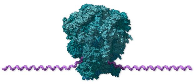 Chi tiết bộ gen SARS-CoV-2: Những tên khủng bố chiếm dụng tế bào phổi người - Ảnh 3.