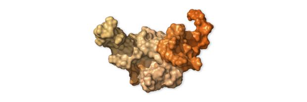 Chi tiết bộ gen SARS-CoV-2: Những tên khủng bố chiếm dụng tế bào phổi người - Ảnh 22.