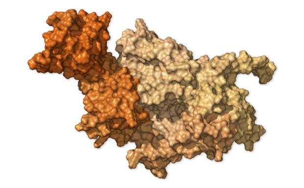Chi tiết bộ gen SARS-CoV-2: Những tên khủng bố chiếm dụng tế bào phổi người - Ảnh 24.