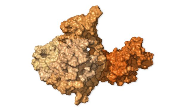 Chi tiết bộ gen SARS-CoV-2: Những tên khủng bố chiếm dụng tế bào phổi người - Ảnh 27.