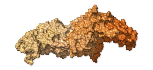 Chi tiết bộ gen SARS-CoV-2: Những tên khủng bố chiếm dụng tế bào phổi người - Ảnh 29.