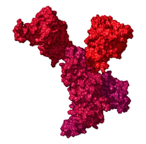 Chi tiết bộ gen SARS-CoV-2: Những tên khủng bố chiếm dụng tế bào phổi người - Ảnh 35.