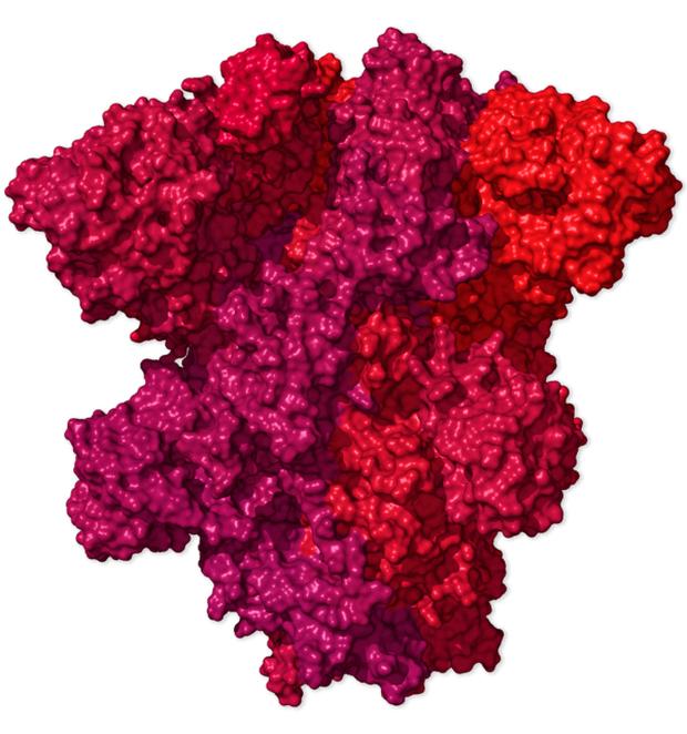 Chi tiết bộ gen SARS-CoV-2: Những tên khủng bố chiếm dụng tế bào phổi người - Ảnh 36.