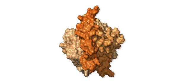 Chi tiết bộ gen SARS-CoV-2: Những tên khủng bố chiếm dụng tế bào phổi người - Ảnh 39.