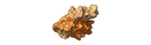 Chi tiết bộ gen SARS-CoV-2: Những tên khủng bố chiếm dụng tế bào phổi người - Ảnh 49.