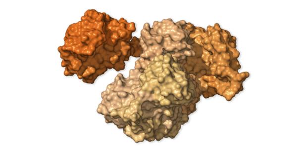 Chi tiết bộ gen SARS-CoV-2: Những tên khủng bố chiếm dụng tế bào phổi người - Ảnh 7.