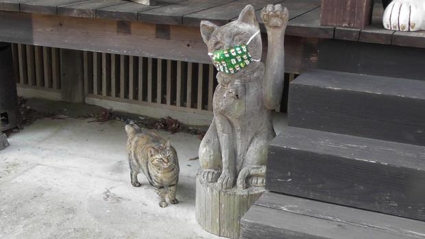 Ngôi đền đặc biệt ở Nhật Bản được mệnh danh là Đền Mèo, trụ trì tự tay làm khẩu trang cho hàng trăm chú mèo gỗ từ tã lót trẻ em - Ảnh 6.