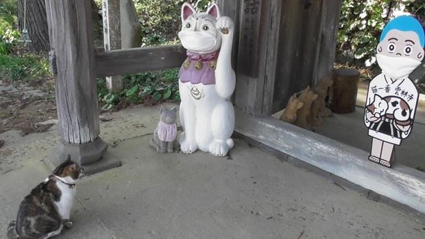 Ngôi đền đặc biệt ở Nhật Bản được mệnh danh là Đền Mèo, trụ trì tự tay làm khẩu trang cho hàng trăm chú mèo gỗ từ tã lót trẻ em - Ảnh 7.