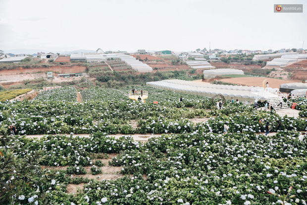 Du khách đổ xô về vườn hoa cẩm tú cầu đẹp nhất Đà Lạt để chụp ảnh dịp nghỉ lễ 30/4 - 1/5 - Ảnh 3.
