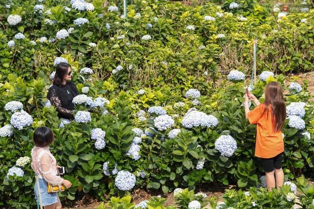 Du khách đổ xô về vườn hoa cẩm tú cầu đẹp nhất Đà Lạt để chụp ảnh dịp nghỉ lễ 30/4 - 1/5 - Ảnh 6.