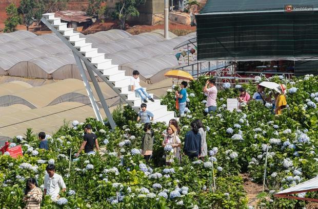 Du khách đổ xô về vườn hoa cẩm tú cầu đẹp nhất Đà Lạt để chụp ảnh dịp nghỉ lễ 30/4 - 1/5 - Ảnh 5.
