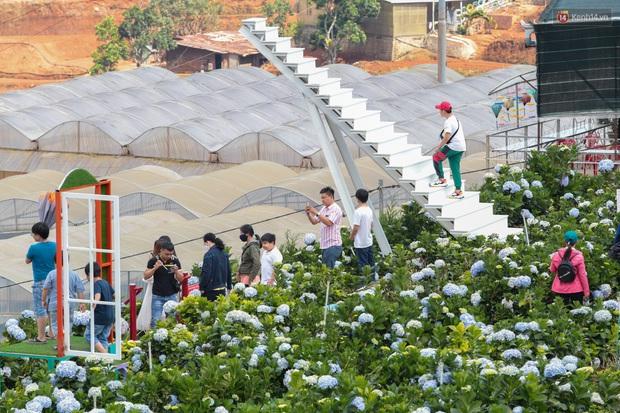 Du khách đổ xô về vườn hoa cẩm tú cầu đẹp nhất Đà Lạt để chụp ảnh dịp nghỉ lễ 30/4 - 1/5 - Ảnh 4.