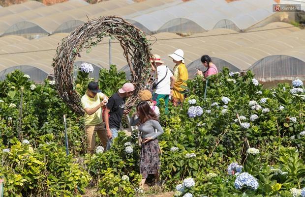 Du khách đổ xô về vườn hoa cẩm tú cầu đẹp nhất Đà Lạt để chụp ảnh dịp nghỉ lễ 30/4 - 1/5 - Ảnh 9.
