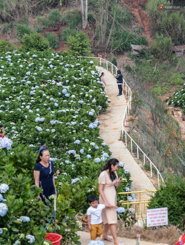 Du khách đổ xô về vườn hoa cẩm tú cầu đẹp nhất Đà Lạt để chụp ảnh dịp nghỉ lễ 30/4 - 1/5 - Ảnh 14.