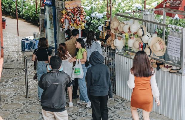 Du khách đổ xô về vườn hoa cẩm tú cầu đẹp nhất Đà Lạt để chụp ảnh dịp nghỉ lễ 30/4 - 1/5 - Ảnh 2.