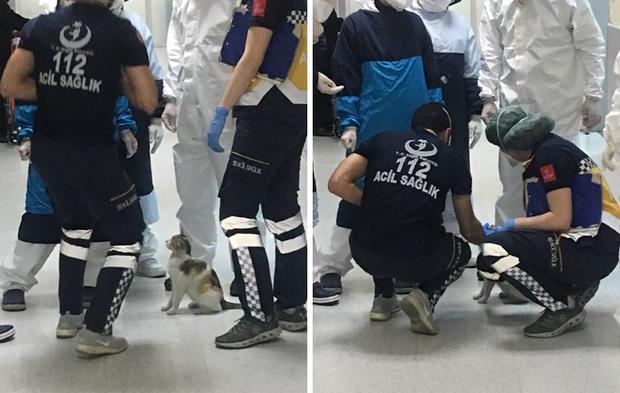 Ấm lòng hình ảnh mèo mẹ bế mèo con tới bệnh viện để khám bệnh, được các bác sĩ nhiệt tình giúp đỡ - Ảnh 2.