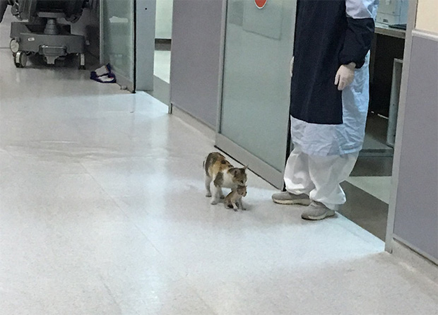 Ấm lòng hình ảnh mèo mẹ bế mèo con tới bệnh viện để khám bệnh, được các bác sĩ nhiệt tình giúp đỡ - Ảnh 3.