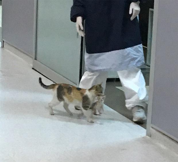 Ấm lòng hình ảnh mèo mẹ bế mèo con tới bệnh viện để khám bệnh, được các bác sĩ nhiệt tình giúp đỡ - Ảnh 4.
