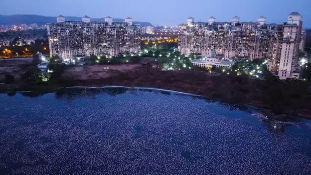 Hồ nước ở Ấn Độ bất ngờ sáng rực sắc hồng do hàng nghìn con chim Hồng Hạc tụ hội trong thời điểm vắng người do dịch bệnh - Ảnh 3.