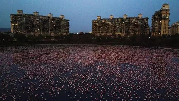 Hồ nước ở Ấn Độ bất ngờ sáng rực sắc hồng do hàng nghìn con chim Hồng Hạc tụ hội trong thời điểm vắng người do dịch bệnh - Ảnh 1.