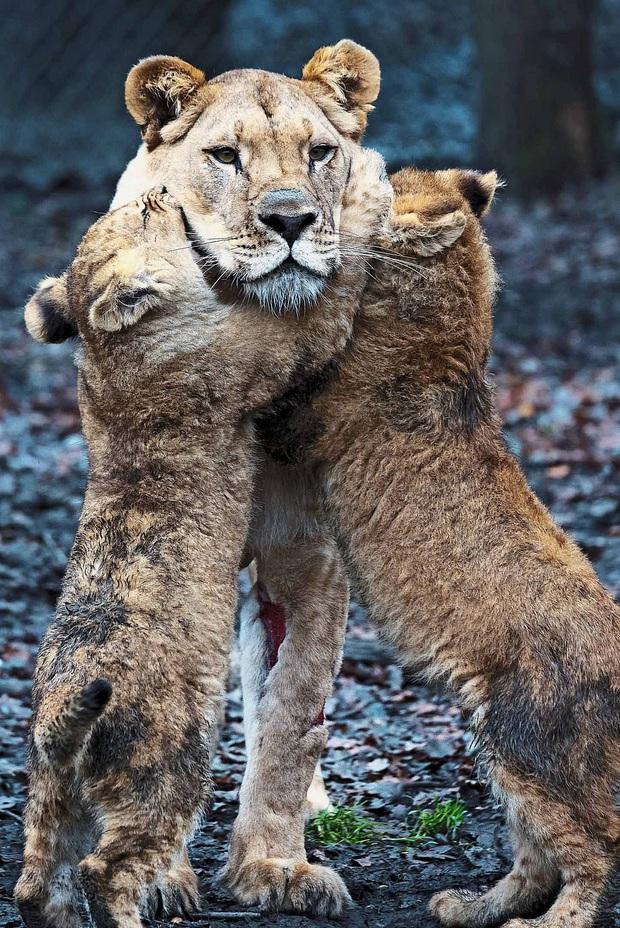 Làm cha khó lắm: Mẹ vắng nhà, sư tử bố bất lực trước lũ con nghịch như quỷ khiến dân mạng vừa buồn cười vừa thương - Ảnh 3.