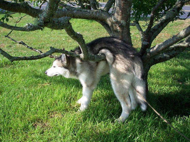 18 chú chó rơi vào rắc rối chất chồng nhưng bên ngoài vẫn phải cố tỏ ra là mình ổn mà cười toe toét - Ảnh 1.