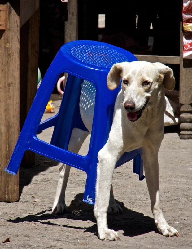 18 chú chó rơi vào rắc rối chất chồng nhưng bên ngoài vẫn phải cố tỏ ra là mình ổn mà cười toe toét - Ảnh 5.