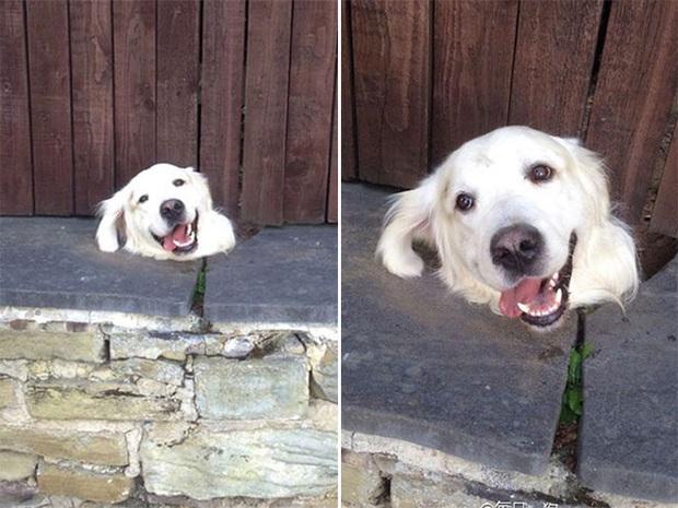 18 chú chó rơi vào rắc rối chất chồng nhưng bên ngoài vẫn phải cố tỏ ra là mình ổn mà cười toe toét - Ảnh 6.