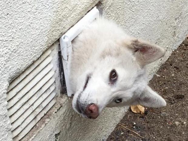 18 chú chó rơi vào rắc rối chất chồng nhưng bên ngoài vẫn phải cố tỏ ra là mình ổn mà cười toe toét - Ảnh 7.