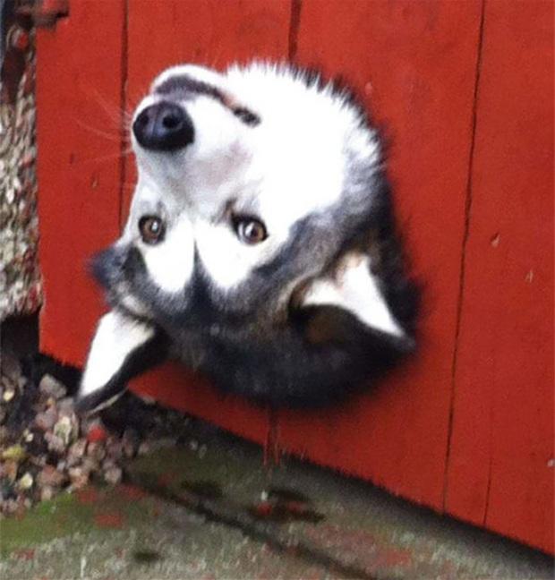18 chú chó rơi vào rắc rối chất chồng nhưng bên ngoài vẫn phải cố tỏ ra là mình ổn mà cười toe toét - Ảnh 8.