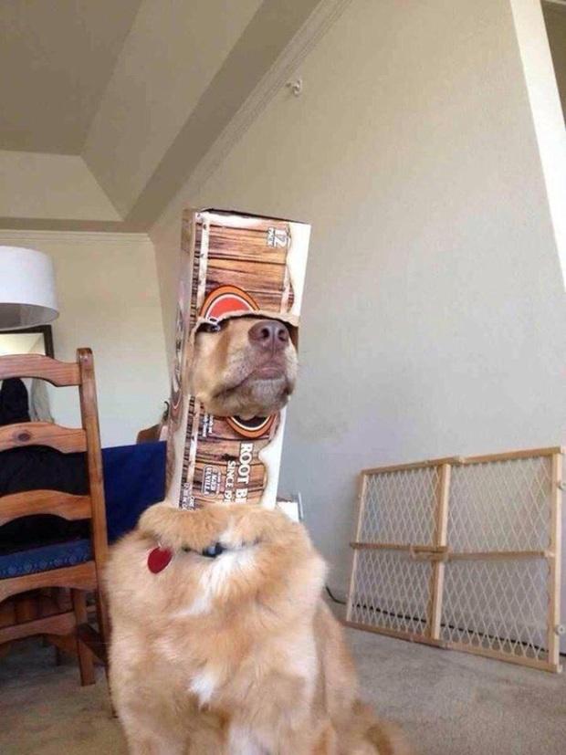 18 chú chó rơi vào rắc rối chất chồng nhưng bên ngoài vẫn phải cố tỏ ra là mình ổn mà cười toe toét - Ảnh 9.