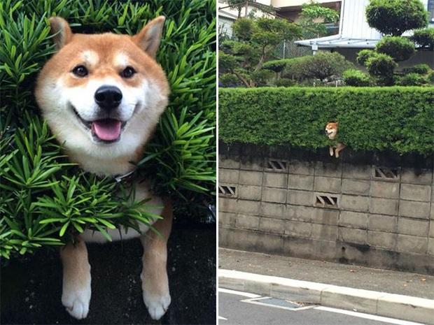 18 chú chó rơi vào rắc rối chất chồng nhưng bên ngoài vẫn phải cố tỏ ra là mình ổn mà cười toe toét - Ảnh 10.