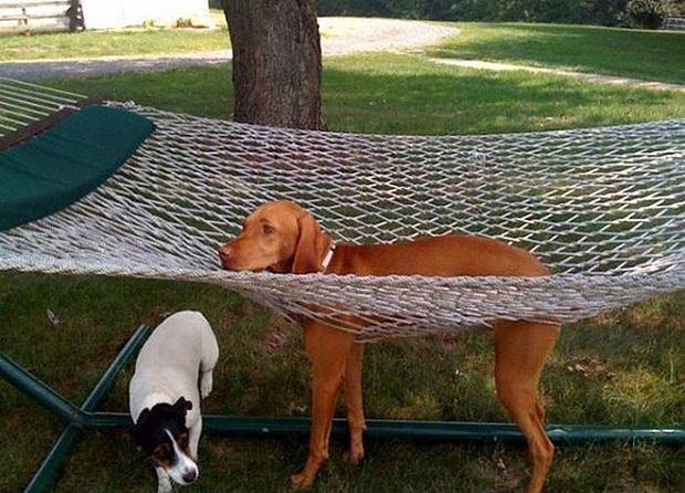 18 chú chó rơi vào rắc rối chất chồng nhưng bên ngoài vẫn phải cố tỏ ra là mình ổn mà cười toe toét - Ảnh 13.