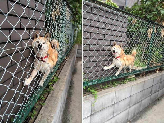 18 chú chó rơi vào rắc rối chất chồng nhưng bên ngoài vẫn phải cố tỏ ra là mình ổn mà cười toe toét - Ảnh 16.