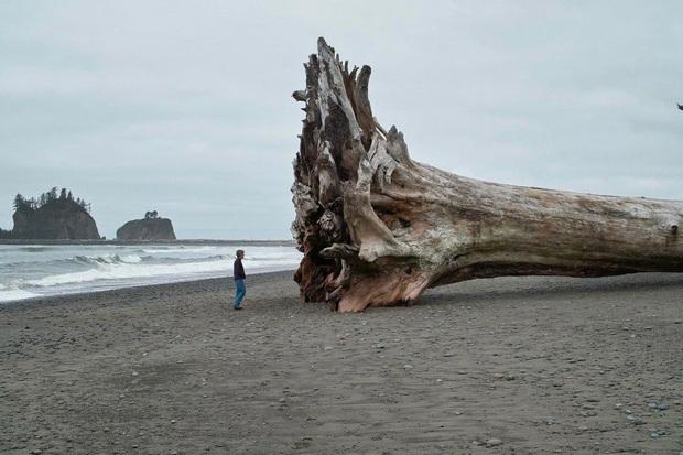 20 vật thể có kích thước khổng lồ khiến loài người trông vô cùng tí hon khi đứng cạnh - Ảnh 1.