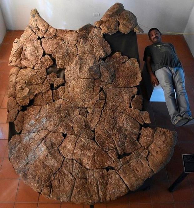 20 vật thể có kích thước khổng lồ khiến loài người trông vô cùng tí hon khi đứng cạnh - Ảnh 9.