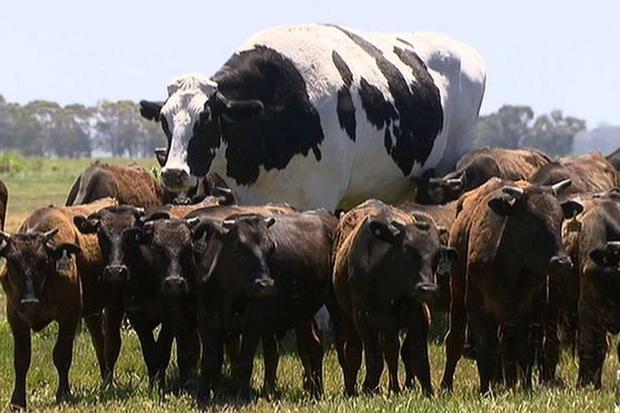 20 vật thể có kích thước khổng lồ khiến loài người trông vô cùng tí hon khi đứng cạnh - Ảnh 11.