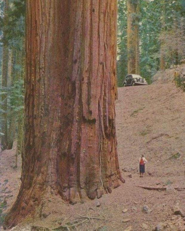 20 vật thể có kích thước khổng lồ khiến loài người trông vô cùng tí hon khi đứng cạnh - Ảnh 15.