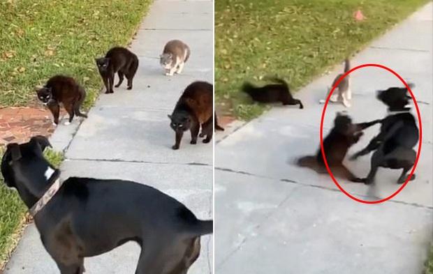 Đi lạc vào chỗ các boss mèo đang chill, chú chó tội nghiệp bị cả băng đảng đuổi chạy tóe khói - Ảnh 2.