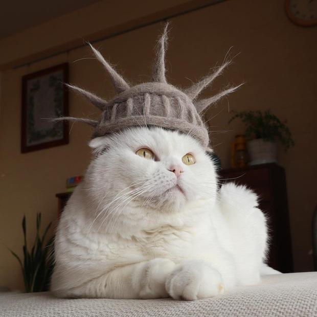 Chải ra cả tấn lông thừa, cặp vợ chồng hô biến chúng thành những chiếc mũ siêu đáng yêu cho mèo nhà mình - Ảnh 2.
